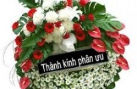 hoa tang
