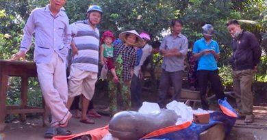 Về chuyện cá nược được vớt ở Phú Phụng